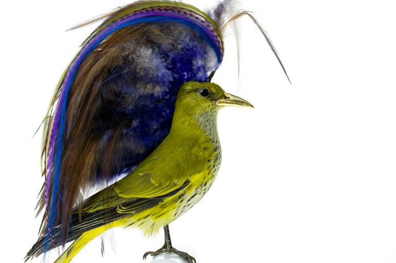 Taxidermy Bird Sculptures (11)