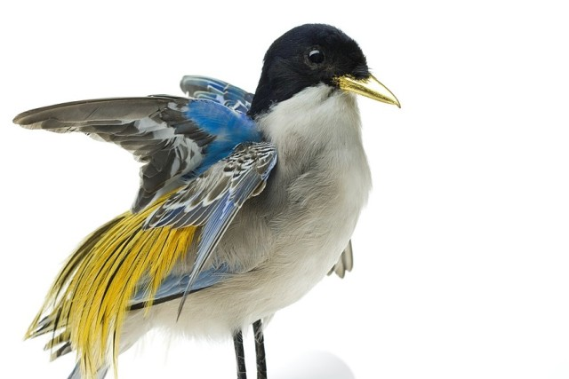 Taxidermy Bird Sculptures (3)