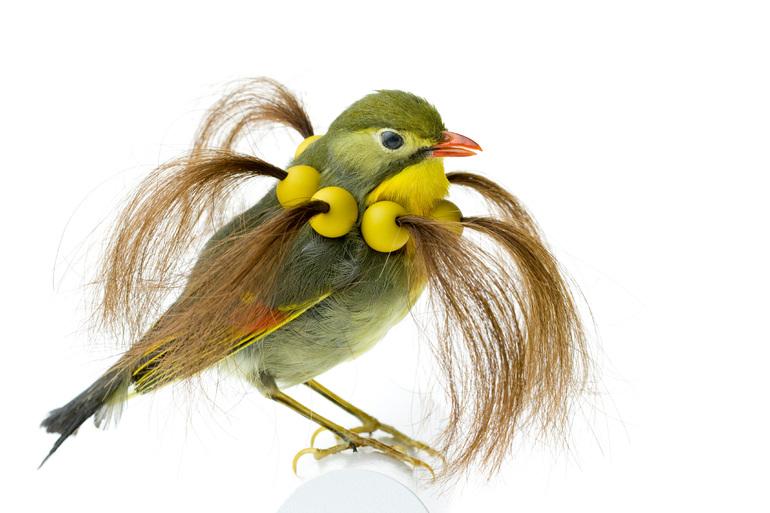 Taxidermy Bird Sculptures (6)