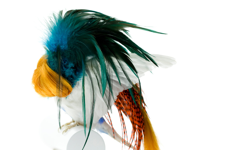 Taxidermy Bird Sculptures (9)