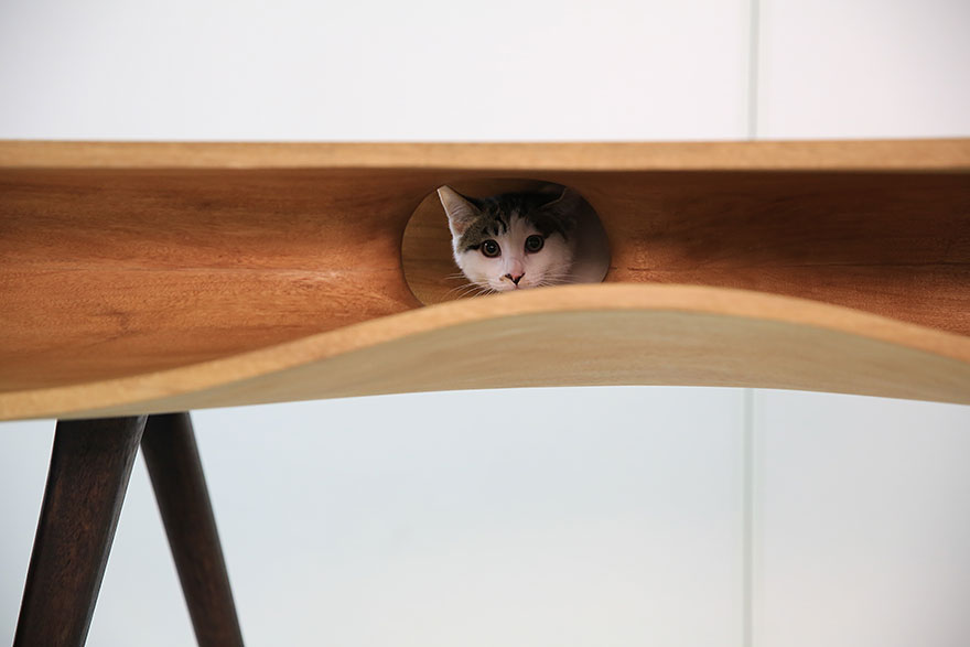 catable-shared-table-for-catsand-people-6