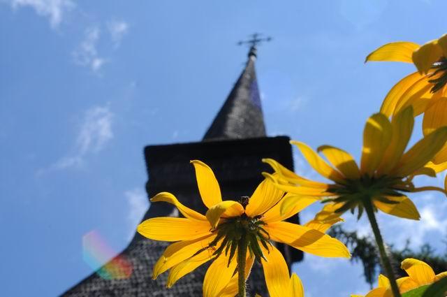 flori - muzeul satului -  lucian muntean  5406
