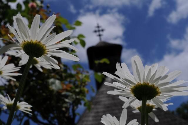 flori - muzeul satului -  lucian muntean  5407