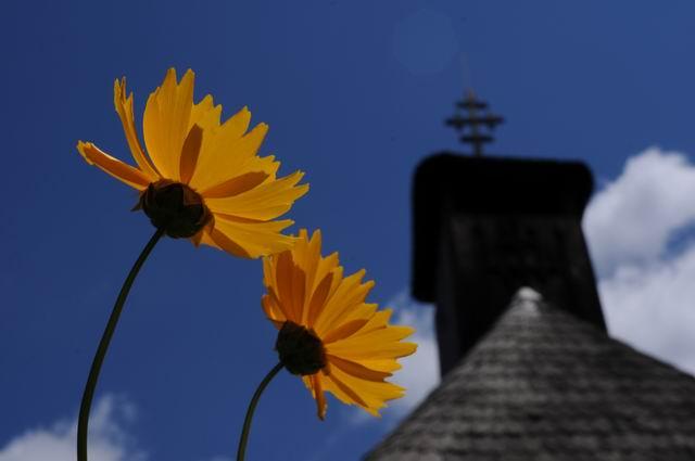 flori - muzeul satului -  lucian muntean  5408