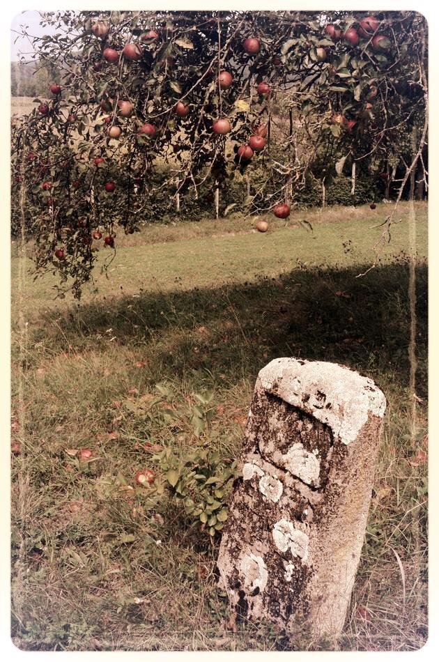 napradea - salaj cimitir evreiesc - foto lucian muntean 24