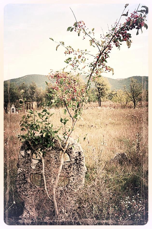 napradea - salaj cimitir - foto lucian muntean 13
