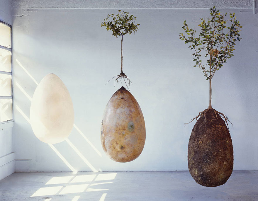 biodegradable-burial-pod-memory-forest-capsula-mundi-9