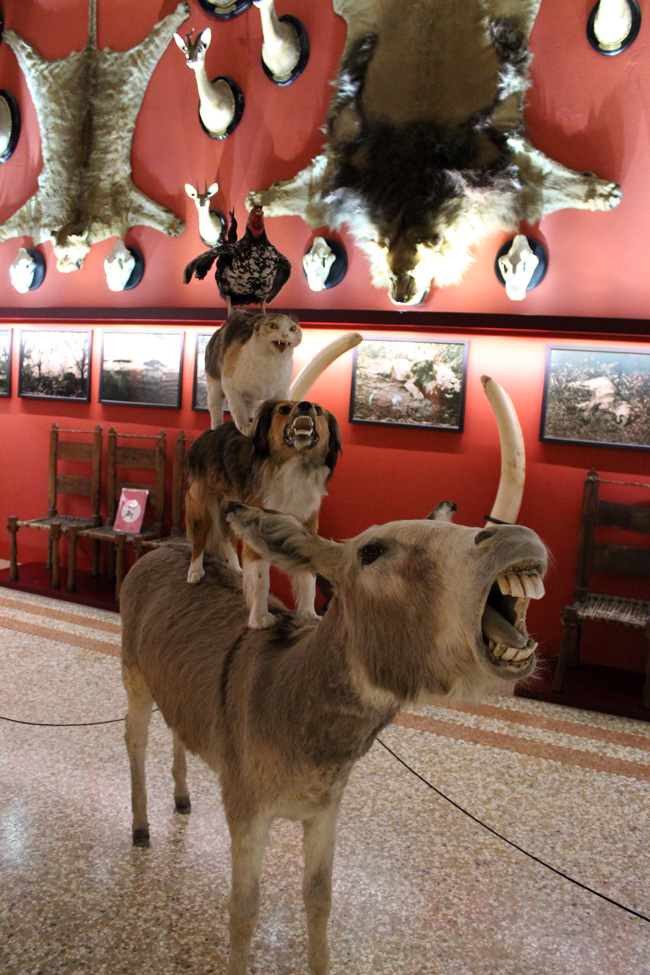 CONTEMPORARY BESTIARY @ Natural History Museum, Venice (17)