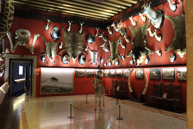 CONTEMPORARY BESTIARY @ Natural History Museum, Venice (20)