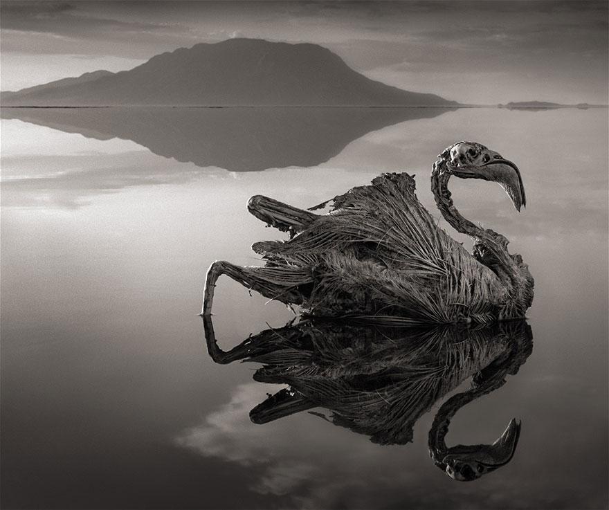 lake-natron-calcium-salt-petrified-animals-nick-brandt-1