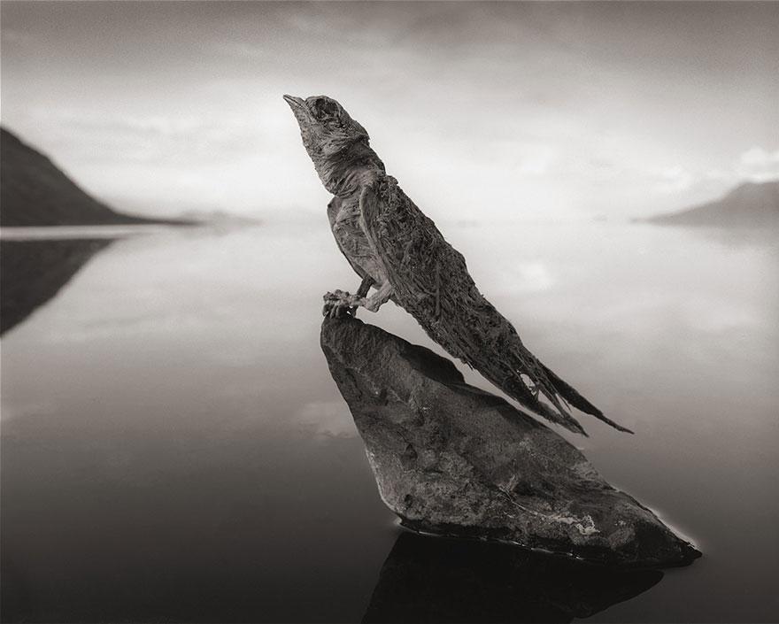 lake-natron-calcium-salt-petrified-animals-nick-brandt-5
