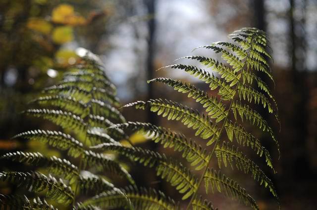 toamna frunze padure foto lucian muntean01