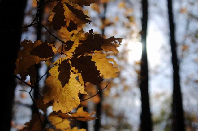 toamna frunze padure foto lucian muntean02