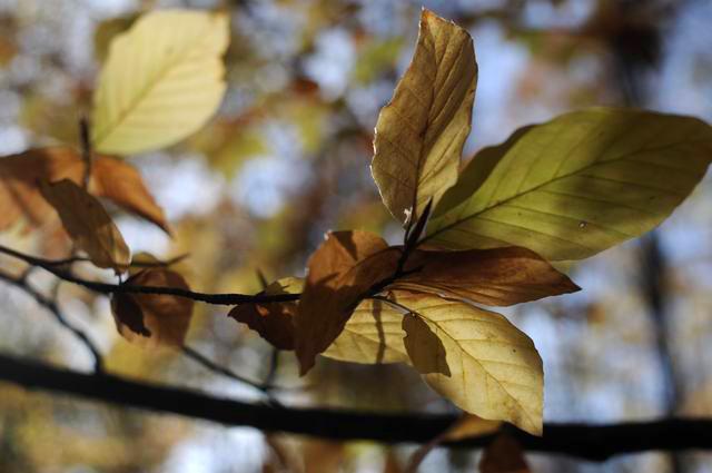 toamna frunze padure foto lucian muntean03