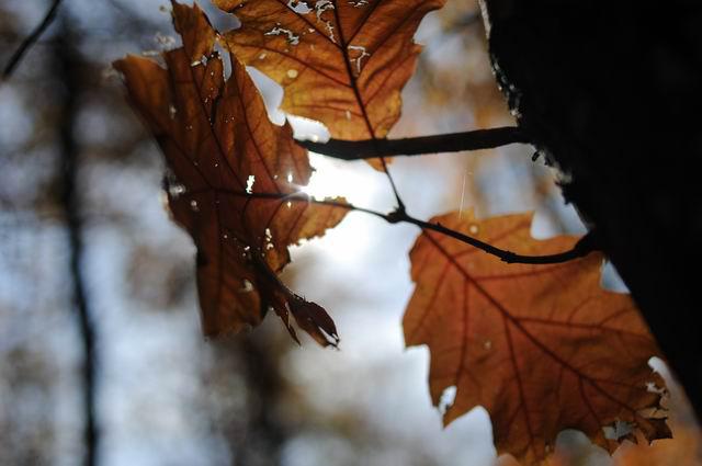 toamna frunze padure foto lucian muntean04