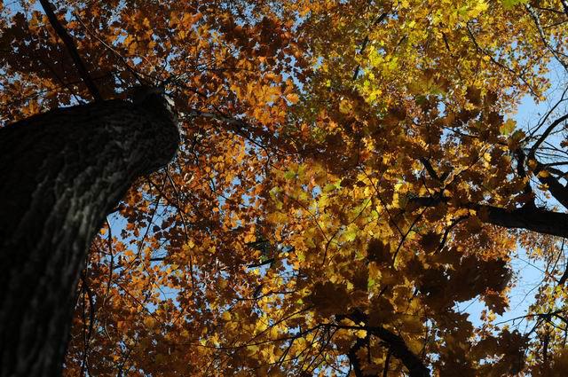 toamna frunze padure foto lucian muntean05