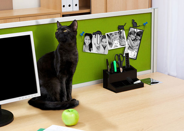 gifts-for-cat-lovers-16-1