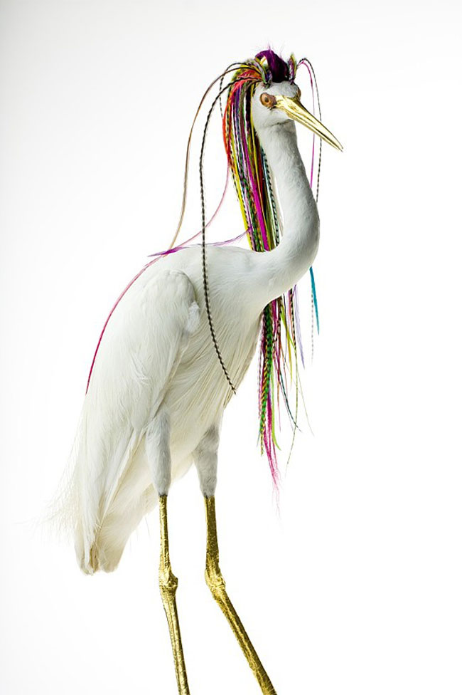 Taxidermy Bird Sculptures (2)