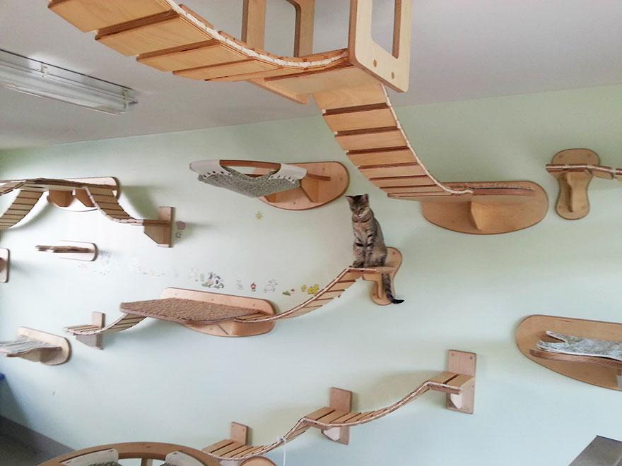 overhead-cat-playground-room-goldtatze-1