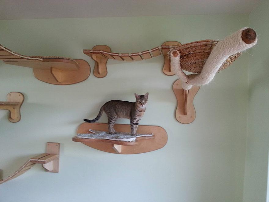 overhead-cat-playground-room-goldtatze-4