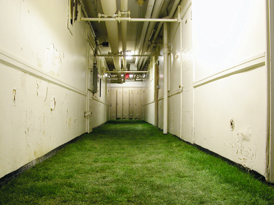 BLOOM-by-Anna-Schuleit-Basement-with-Sod