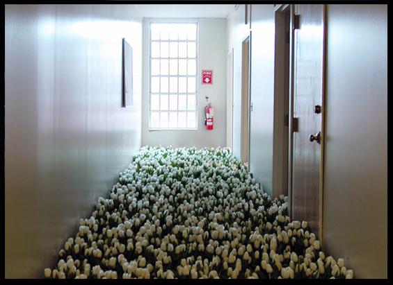 BLOOM-by-Anna-Schuleit-White-Tulips
