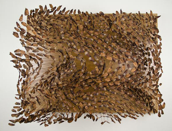 pinecone_seedscape1