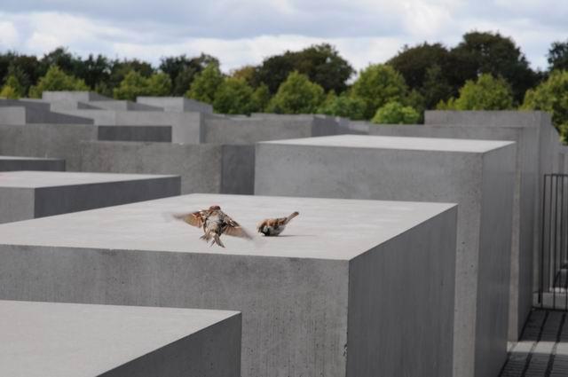 Resize of berlin comemorare holocaust foto lucian muntean _0002