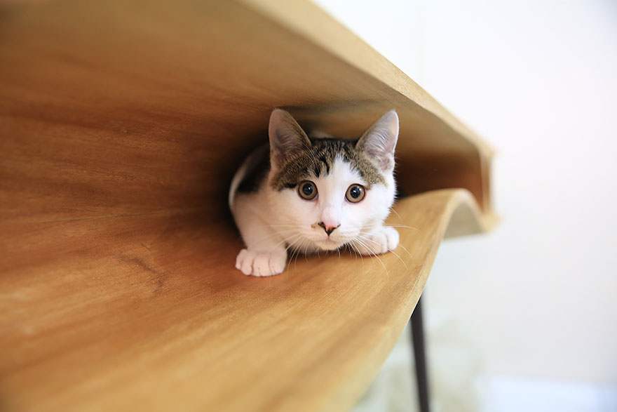 catable-shared-table-for-catsand-people-5