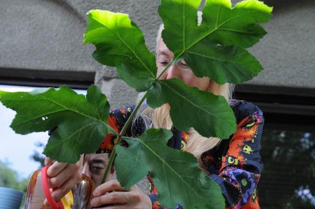Resize of Shogo Kariyazaki Kariyzaki - ikebana - foto lucian muntean _09
