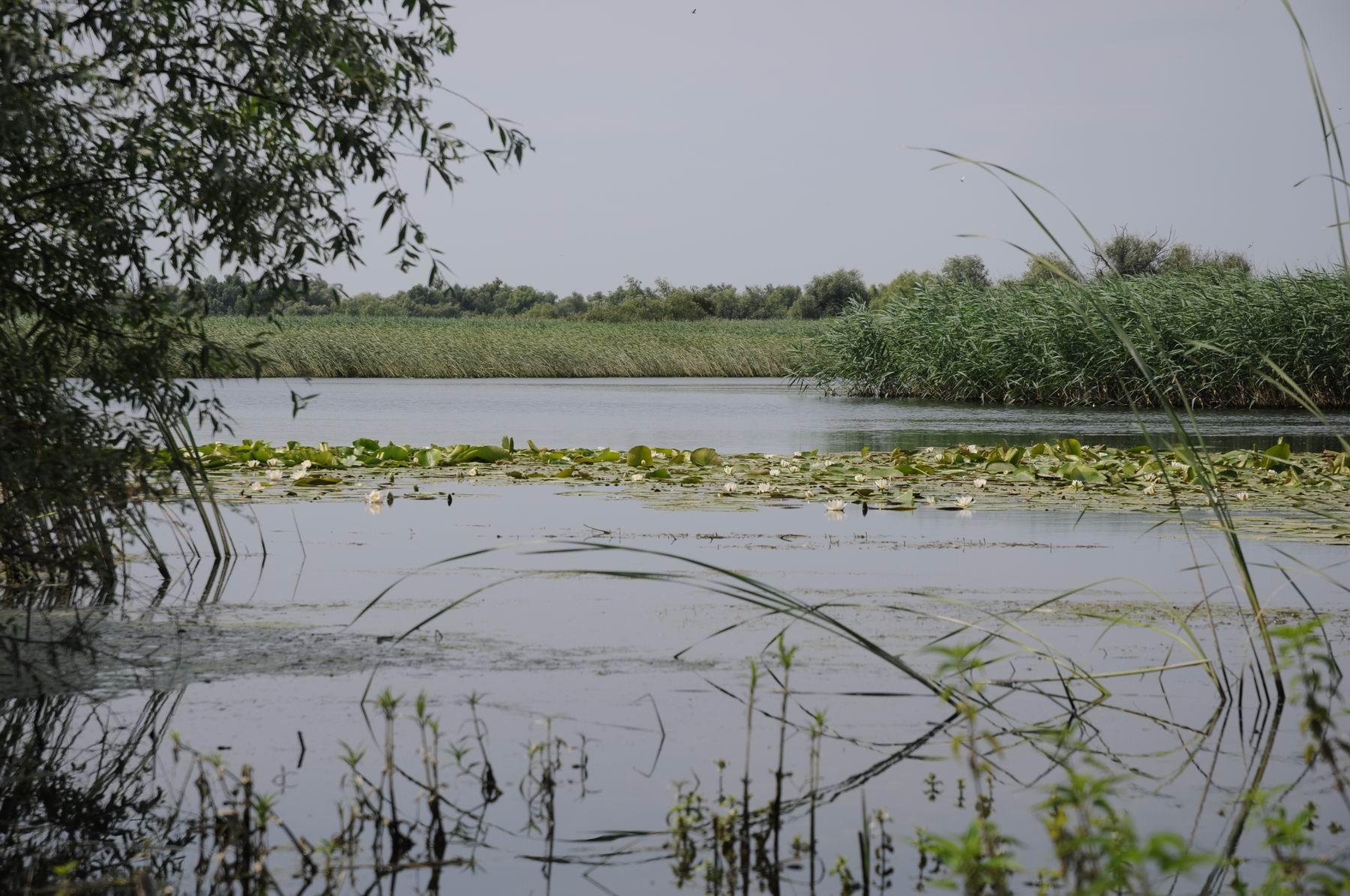 pelicam delta dunarii foto lucian muntean 029