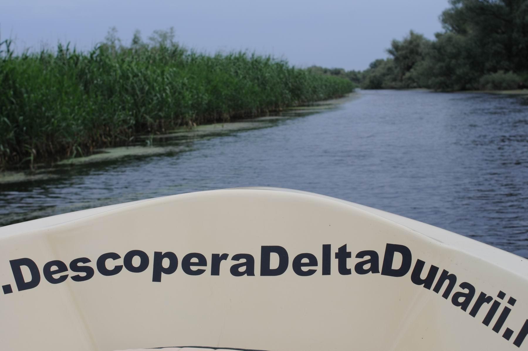 pelicam delta dunarii foto lucian muntean 034