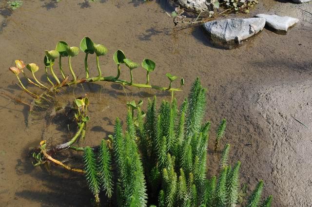 gradina botanica vasile fati - jibou - foto lucian muntean 10