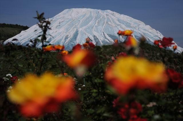 gradina botanica vasile fati - jibou - foto lucian muntean 14