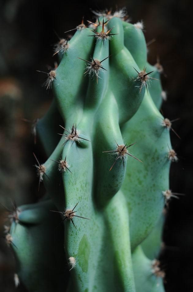gradina botanica vasile fati - jibou - foto lucian muntean 21