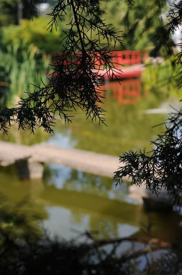 gradina botanica vasile fati - jibou - foto lucian muntean 32