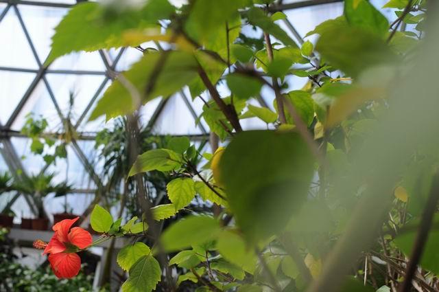 gradina botanica vasile fati - jibou - foto lucian muntean 53