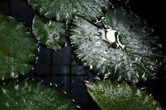 gradina botanica vasile fati - jibou - foto lucian muntean 55