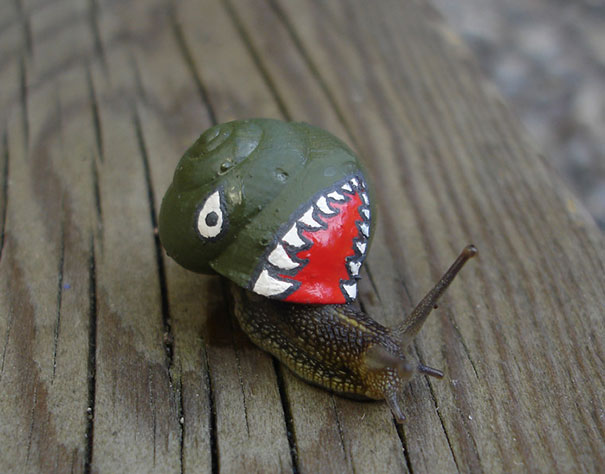 painted-snail-shell-21