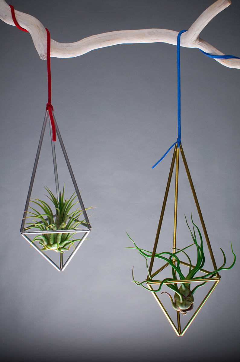 Plante decorative by Aerium