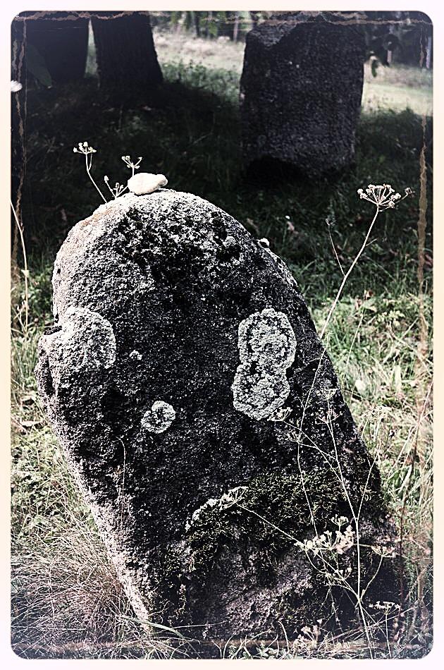 napradea - salaj cimitir evreiesc - foto lucian muntean 23