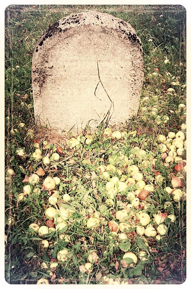 napradea - salaj cimitir evreiesc - foto lucian muntean 25