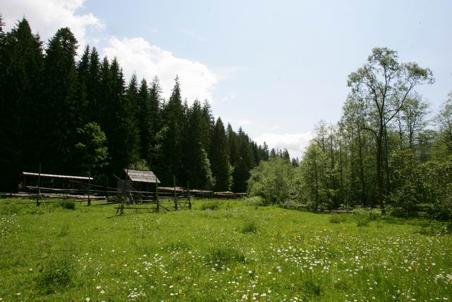 mocanita - valea vaserului - foto lucian muntean 0055