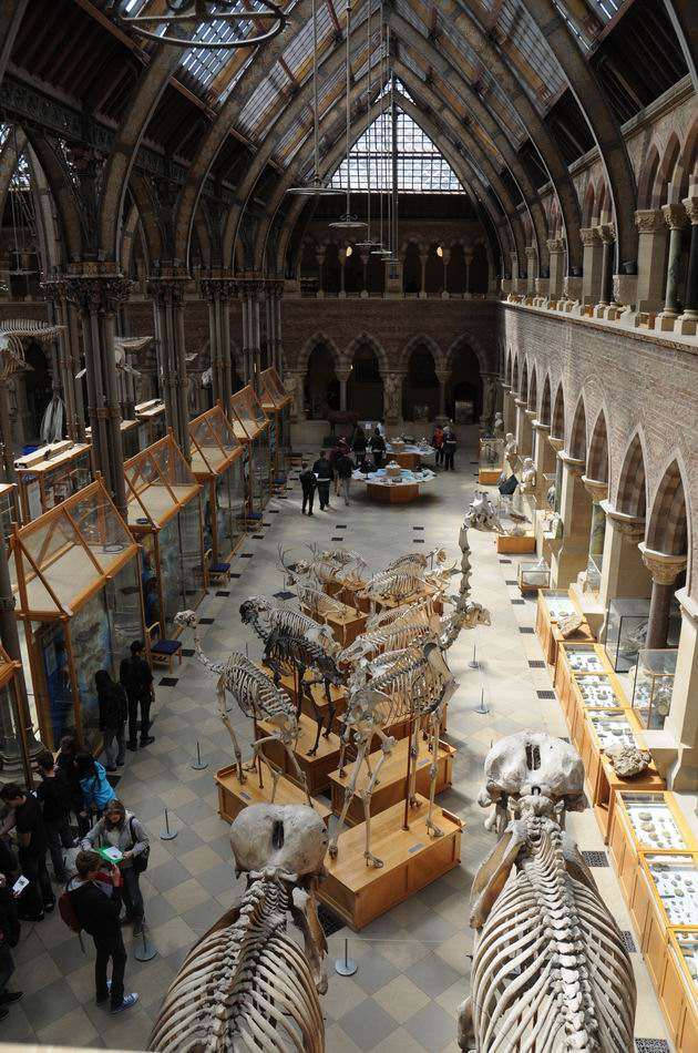 oxford university museum of natural history - photo lucian muntean _0002