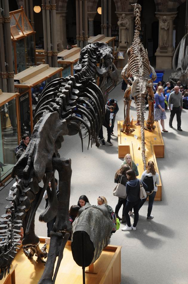 oxford university museum of natural history - photo lucian muntean _0003