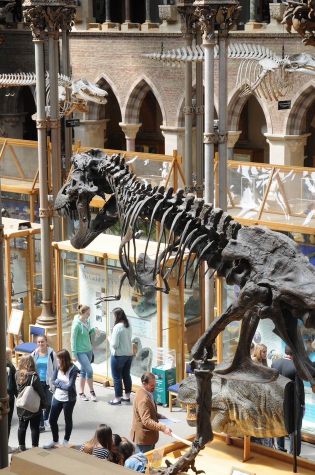 oxford university museum of natural history - photo lucian muntean _0004