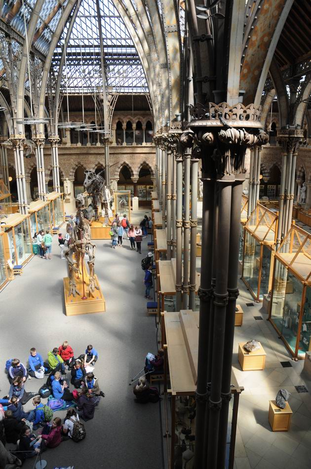 oxford university museum of natural history - photo lucian muntean _0005