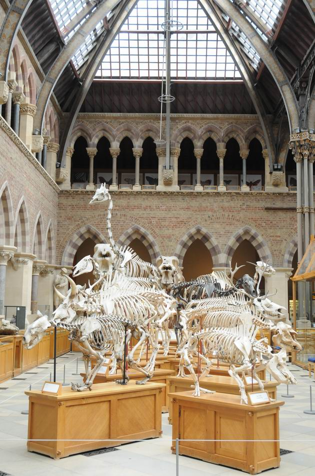 oxford university museum of natural history - photo lucian muntean _0008