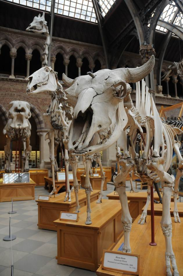 oxford university museum of natural history - photo lucian muntean _0010