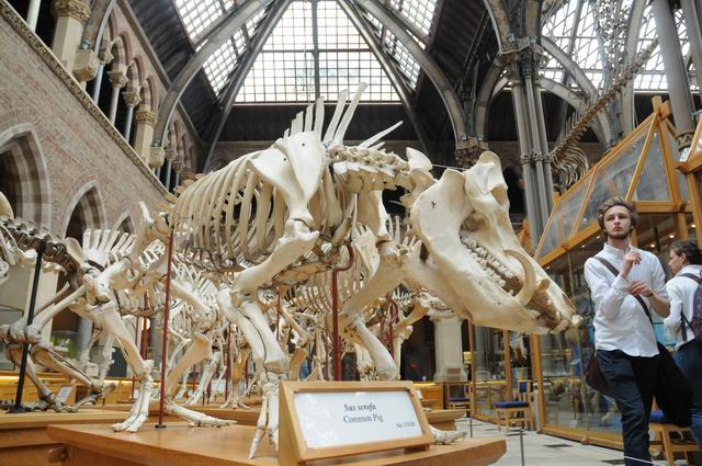 oxford university museum of natural history - photo lucian muntean _0011